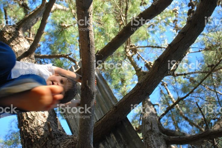 Boy hanging in a Tree royalty-free stock photo
