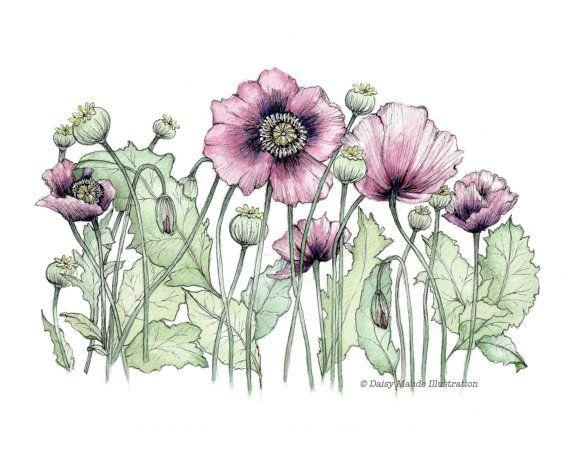Wild Poppies  Flowers Watercolour Painting Ink Pen by TheInkyDeer