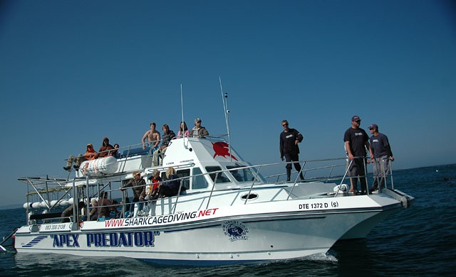 Great White Shark Tour Boat