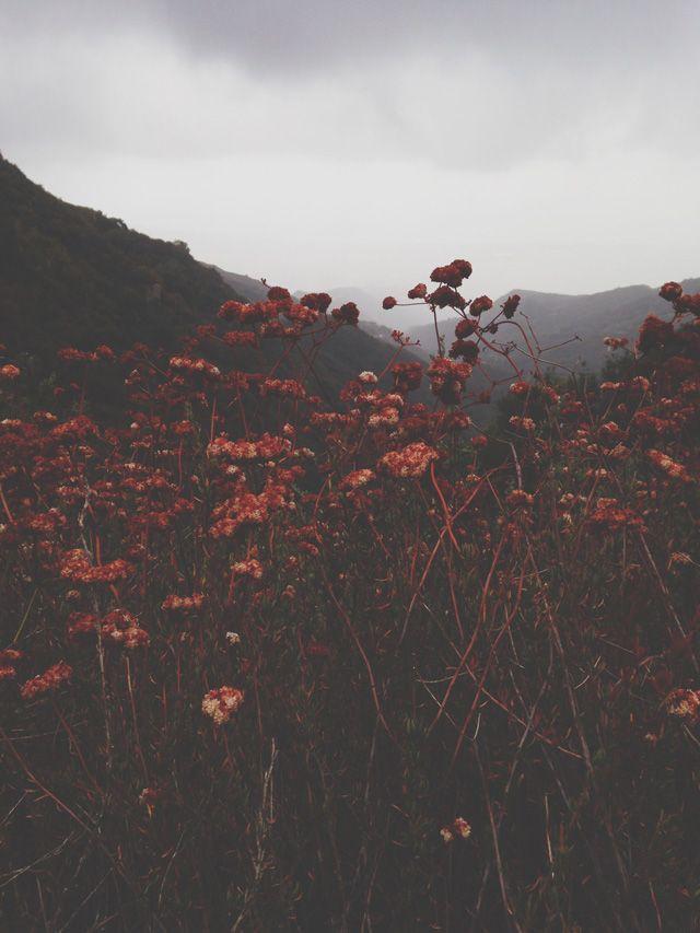 Finch & Fawn : Mountain Adventure