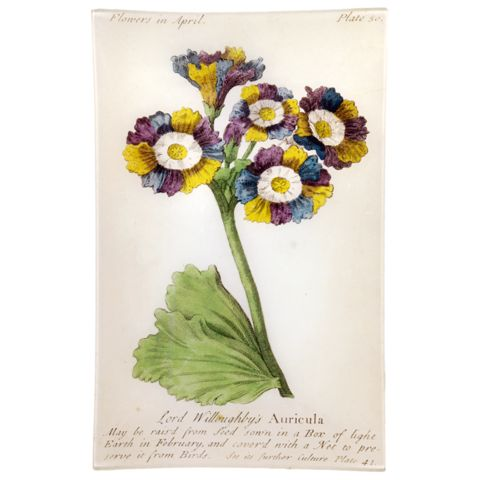 "John Derian Company Inc — Auricula (Floral) 9 x 14"" Wall Tray: Wall Art, Decor, Fans, Wall Trays, Johnderian, Products, Auricula Floral"
