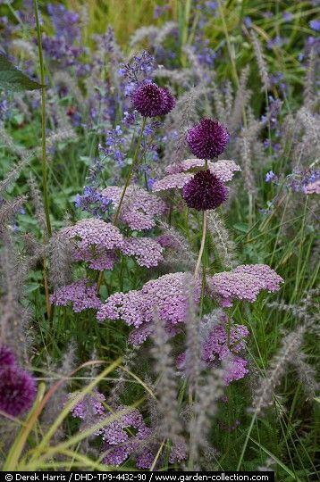 """gardeninglovers: """" Achillea, Allium and grasses """""""