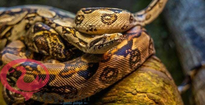 الافعى في المنام لابن سيرين 1 Snake Umbrella Photography Photography Poses For Men