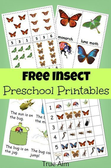 15 Pages of Free insect preschool printables! Includes number clip cards, insect flash cards, patterns, an early reader and more!