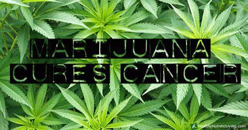 HOW and WHY does Cannabis Cure Cancer – Scientific Explanation