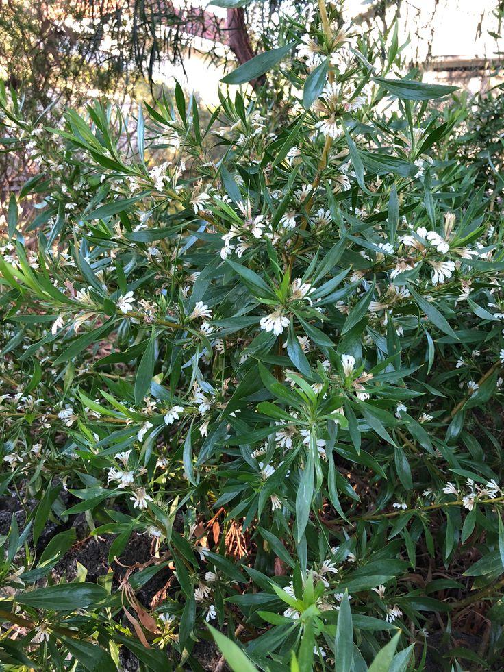 #Flowering #Perth #January