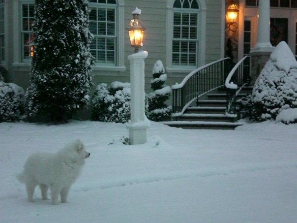 Leia during the first winter on Thomas Place