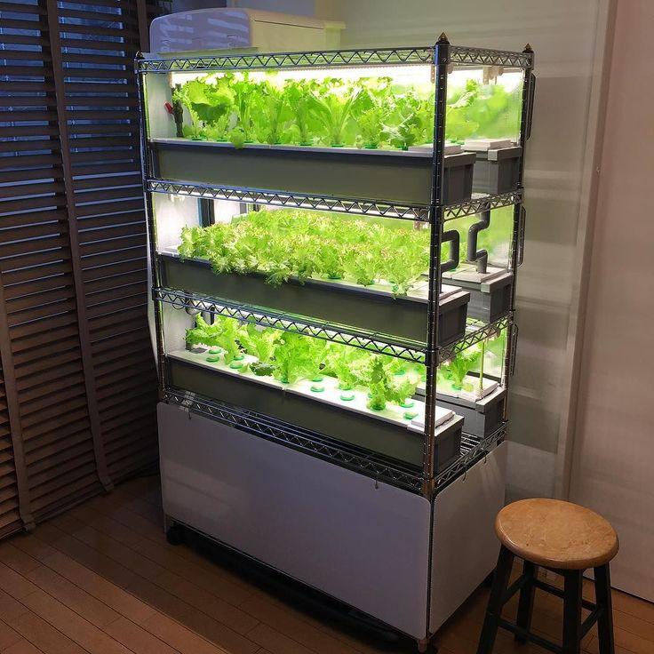 #hydroponics #indoorgarden #SUIKOVegefarm #水耕栽培 #水光ベジファーム  My tiny farm by hydroponics_tedsongying
