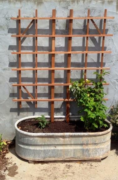 Raspberry / Blackberry Trough | Raspberry plants, Plants ...