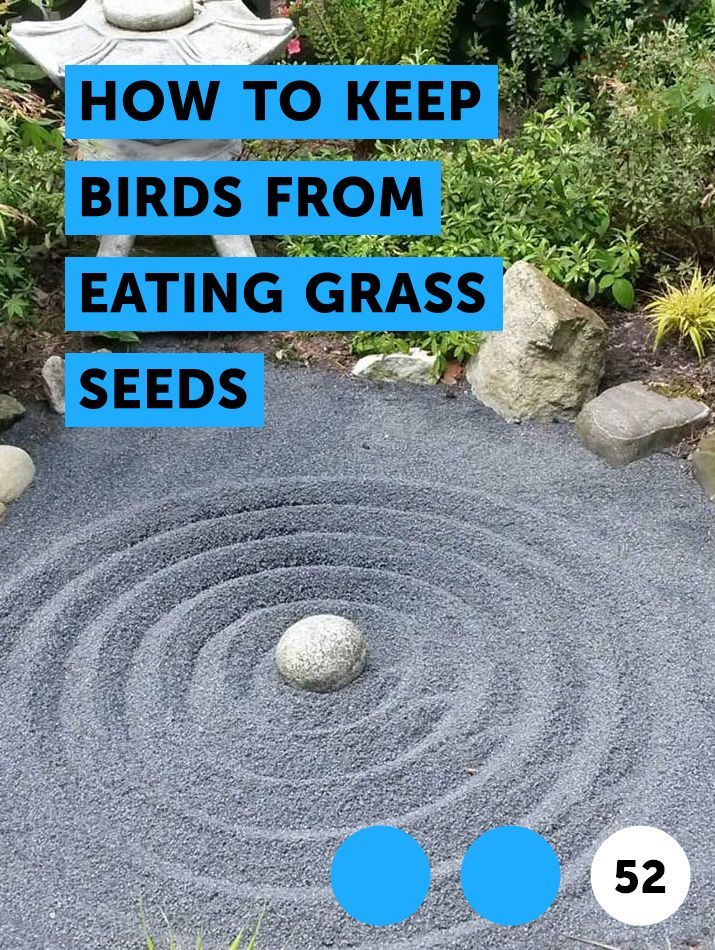 Learn How To Keep Birds From Eating Grass Seeds How To Guides Tips And Tricks Vegetable Planting Guide Grass Seed Plant Diseases