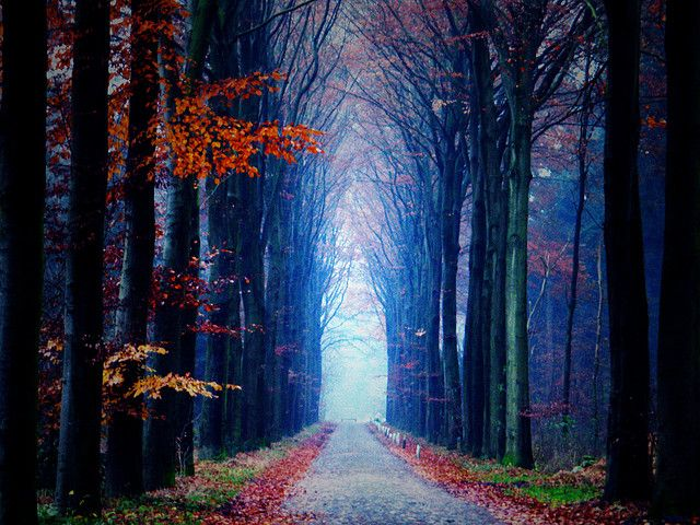 Tree Tunnel Drenthe, Netherlands - Spectacular Places(10+ pics)