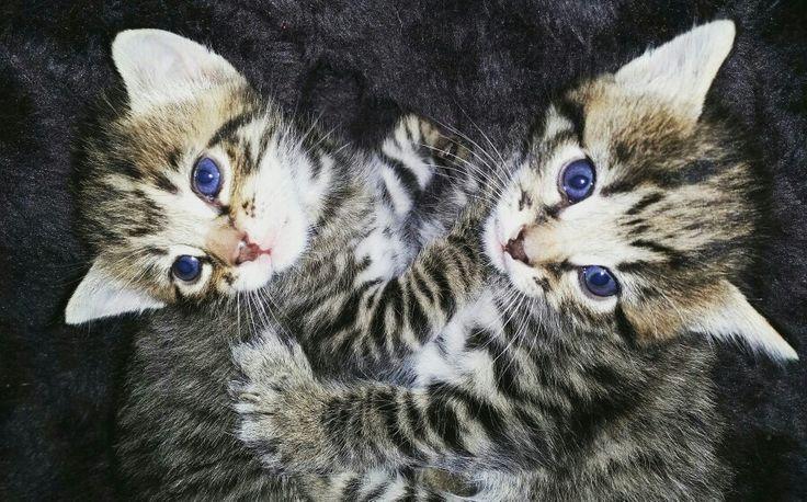 Kittens 2015