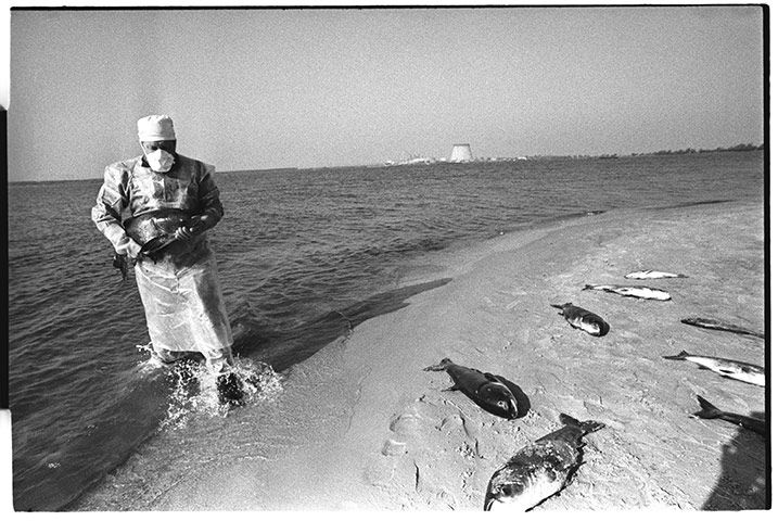Credit: Igor Kostin/Corbis June 1986: Dead fish are collected by an artificial lake within the Chernobyl site that was used...