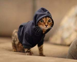 Cat + Hoodie = Hilarious