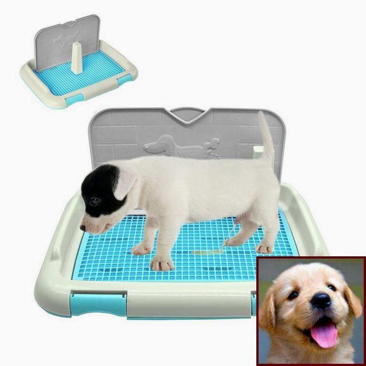 Dog Behavior Nature Vs Nurture And Dog Training Classes Raleigh Nc