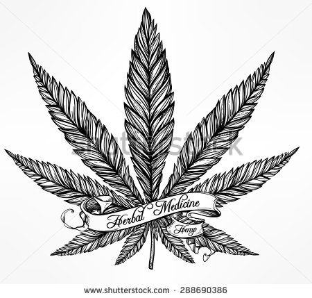 Hemp Cannabis Leaf in vintage linear style. Marijuana silhouette clip art. Concept design, Elegant tattoo artwork. Isolated vector illustration. Text template.