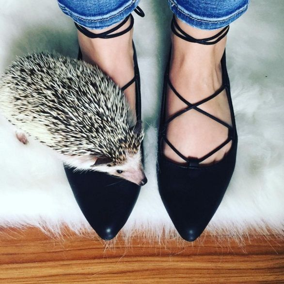 Our Lace-Up Ballet Flats are so great, even hedgehogs will want to wear them. #Regram @annika_kaarina