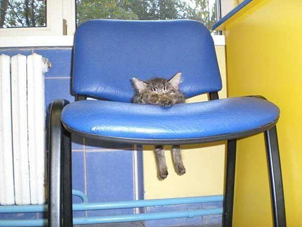 pets-stuck-furniture3