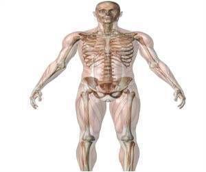 Best 25 Skeletal Muscle Ideas On Pinterest Human