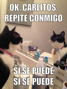 Funny Cat Memes, Funny Cats, Cats Coffee, Funny Nice, Teacher Funnies, Spanish…
