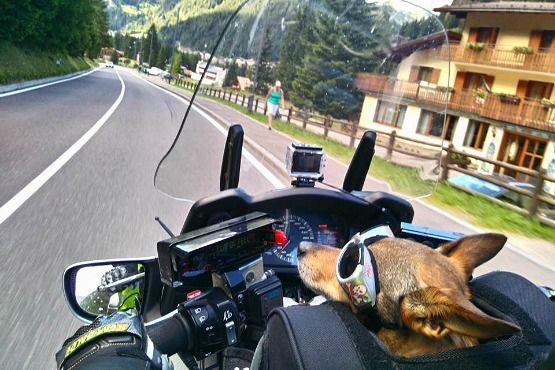 Viajar con perro en moto https://mindfultravelbysara.com/viajar-en-moto-con-perro/