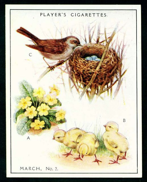 "Player's Cigarettes  ""A Nature Calendar"" (series of 24 large cards issued in 1930) #6 March (2)"
