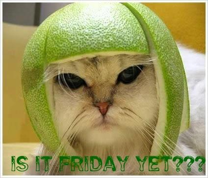 is it friday yet??: Animals, Funny Cats, Funny Stuff, Funnies, Things, Funny Animal, Has
