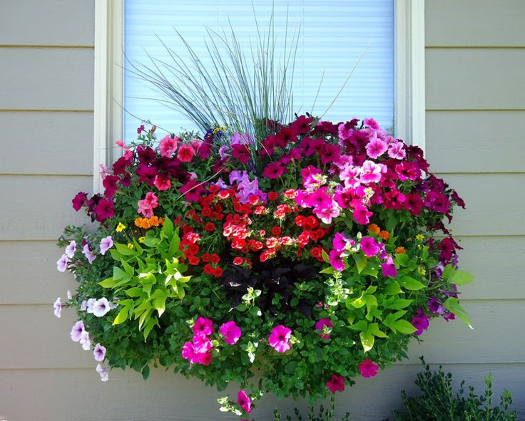 Wave Petunias, Burgundy and lime Potato Vines, Million Bell, Marigolds and ornamental grasses.