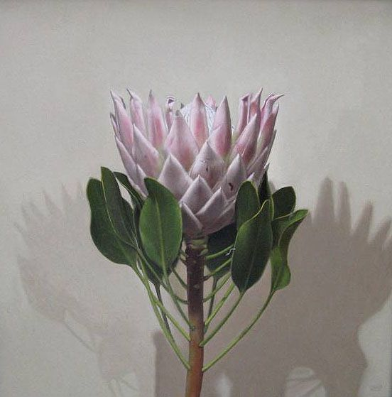 king protea - Google Search