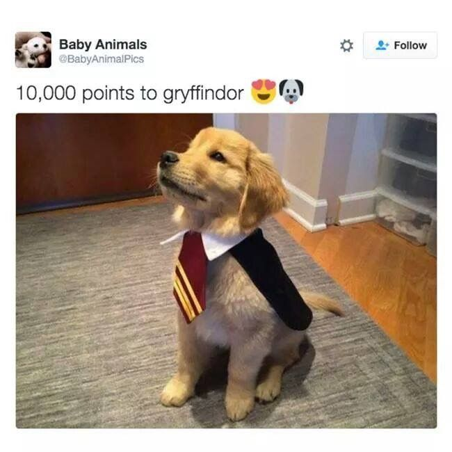 Draco, why are you in Gryffindoor uniform? (Get it? Because he's blond...)