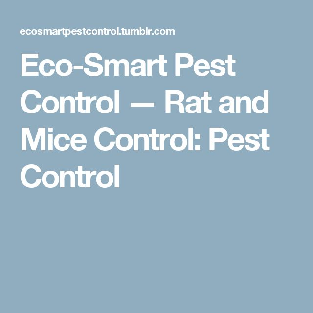 Eco-Smart Pest Control — Rat and Mice Control: Pest Control