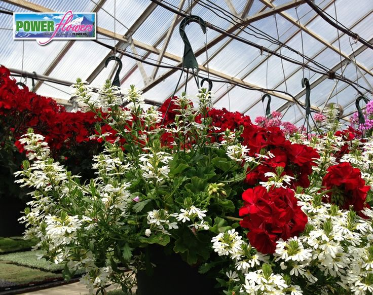 Hanging Flower Baskets Seattle : Best images about hot hanging baskets on