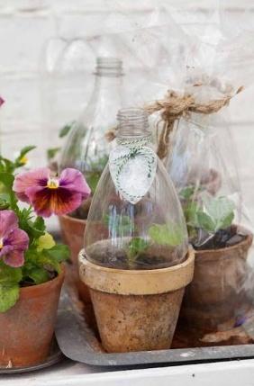 Basilicum kweken met petfles