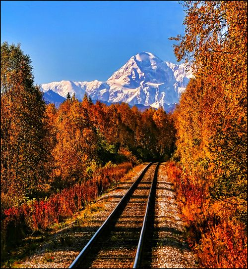 Mt. McKinley, AlaskaFall Leaves, Autumn, Wilderness Railroad, Alaska, Training Track, National Parks, Training Riding, Places, Nature Beautiful