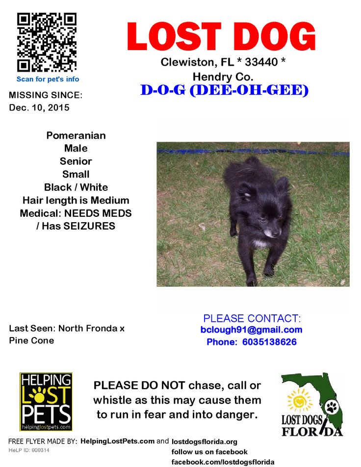 lost dog pit bull terrier fort myers fl united states lost dogs pinterest pit bull terriers bull terrier and pit bull