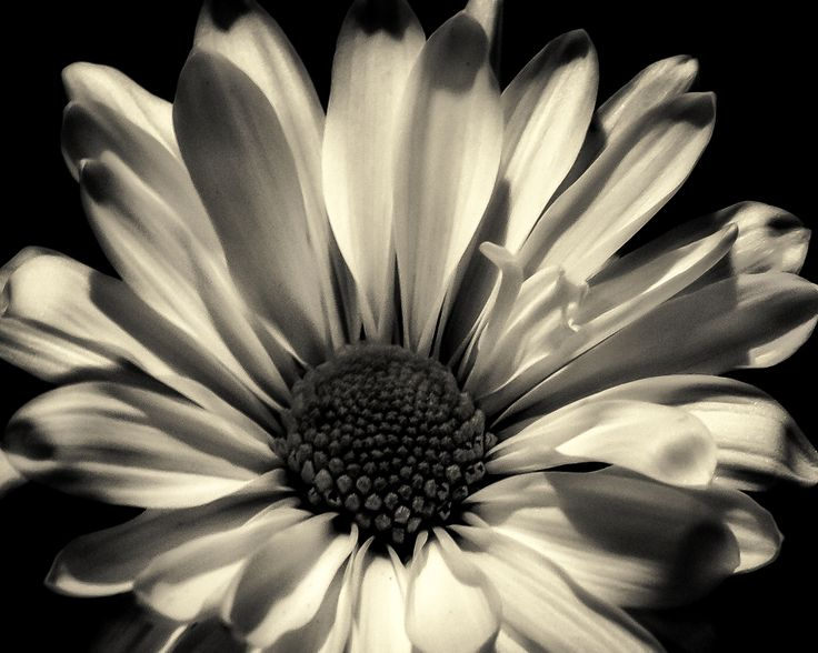 Quietly She Waits - Flower Art Work - Black and White Flower Art