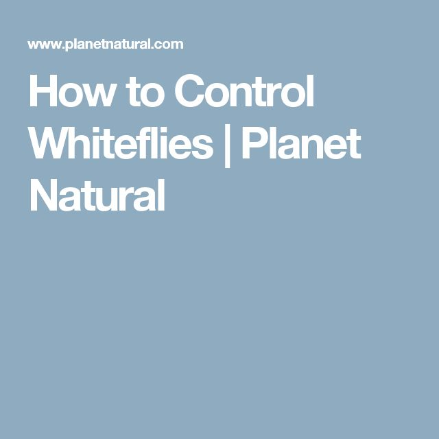 How to Control Whiteflies | Planet Natural