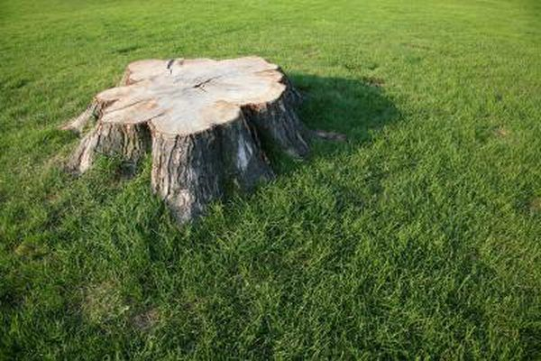 How To Get Rid Of Stumps In The Ground