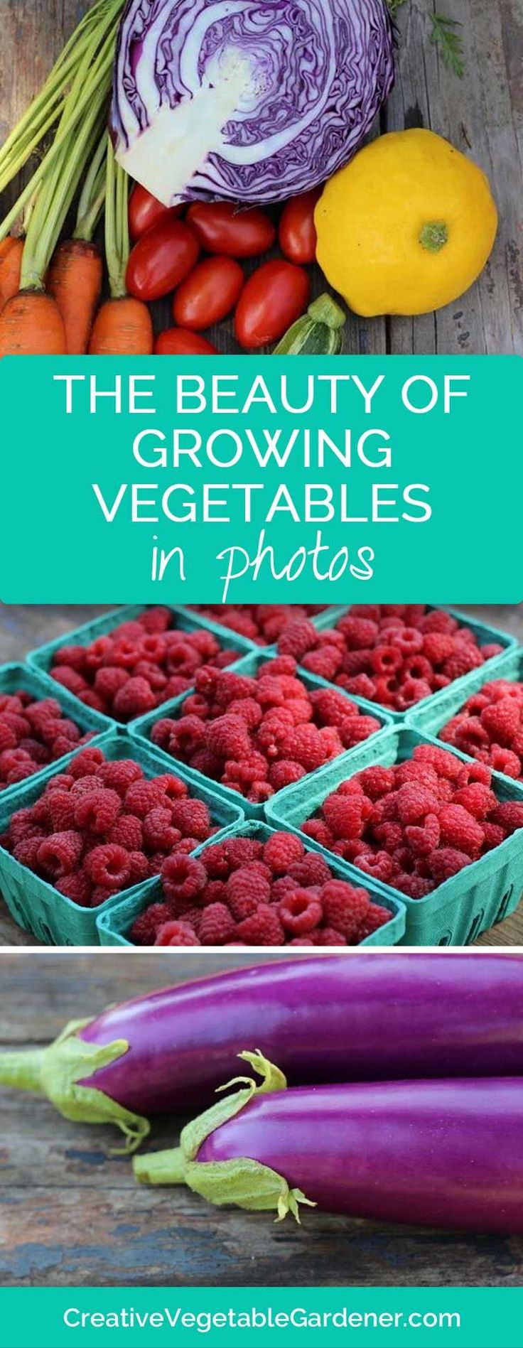341 best Vegetable Ideas from The Barn Nursery, Chattanooga! images ...