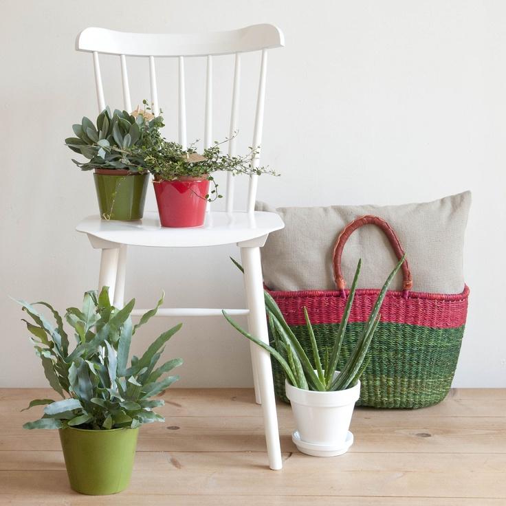 Stoelen, planten, manden en meer - Dille & Kamille