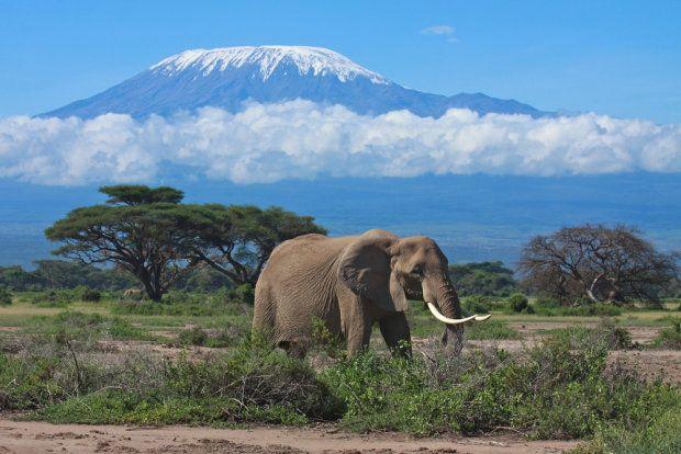 Kenia, widok na Kilimandżaro