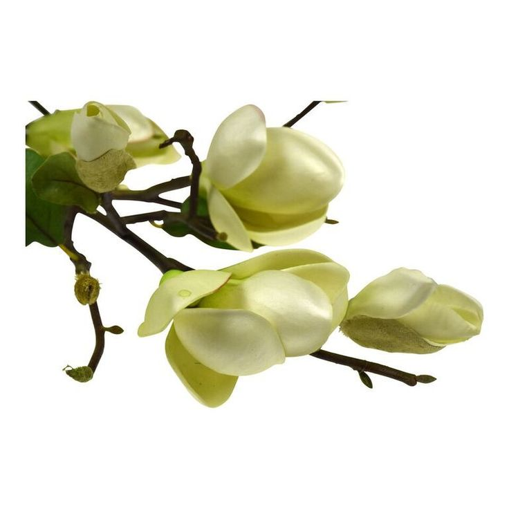 Magnolia Tree Branch. A structural contemporary stem, several together in a vase is all you need to make as statement.