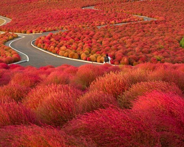 Park Hitachi in Japan