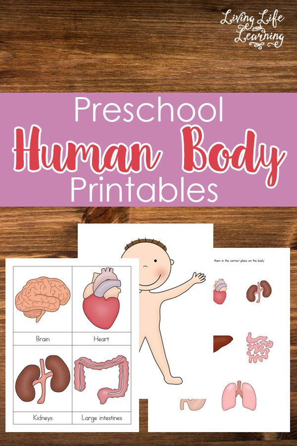 Kids will love using these FREE Preschool Human Body Printables. They are great for learning about the human body and how it works. N