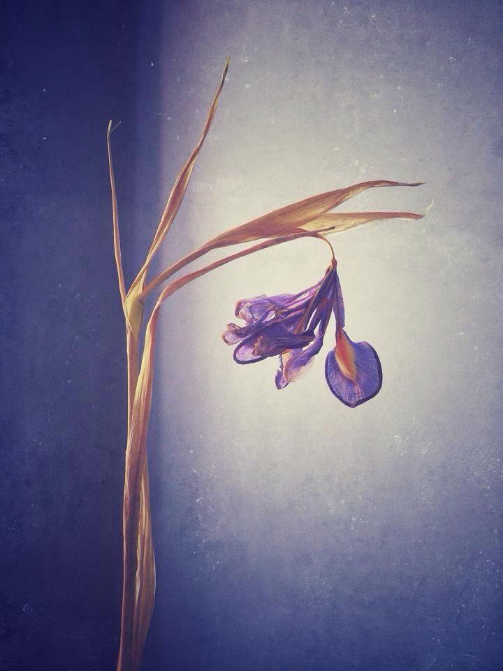 Flowers , iPhone, art