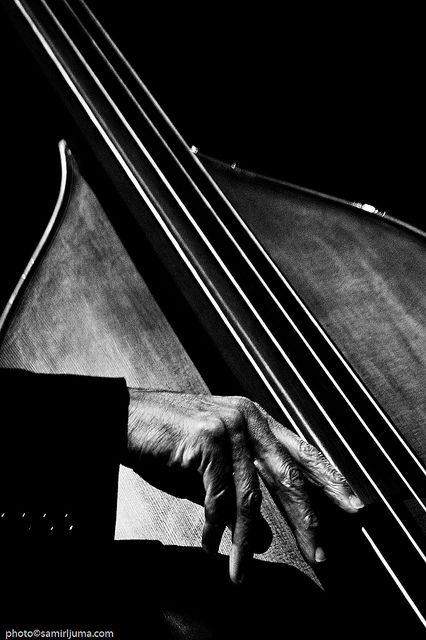 mymanhattanlife:    jazzphotodaily:    The hands of bassist Ron Carter at work, captured by Samir Ljuma at the Skopje Jazz Festival…  Ron Carter SJF2008 (by Samir Ljuma)