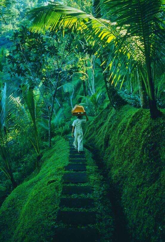 Ubud, Bali pinterest ↠ @Aaliyah_Nichole❁