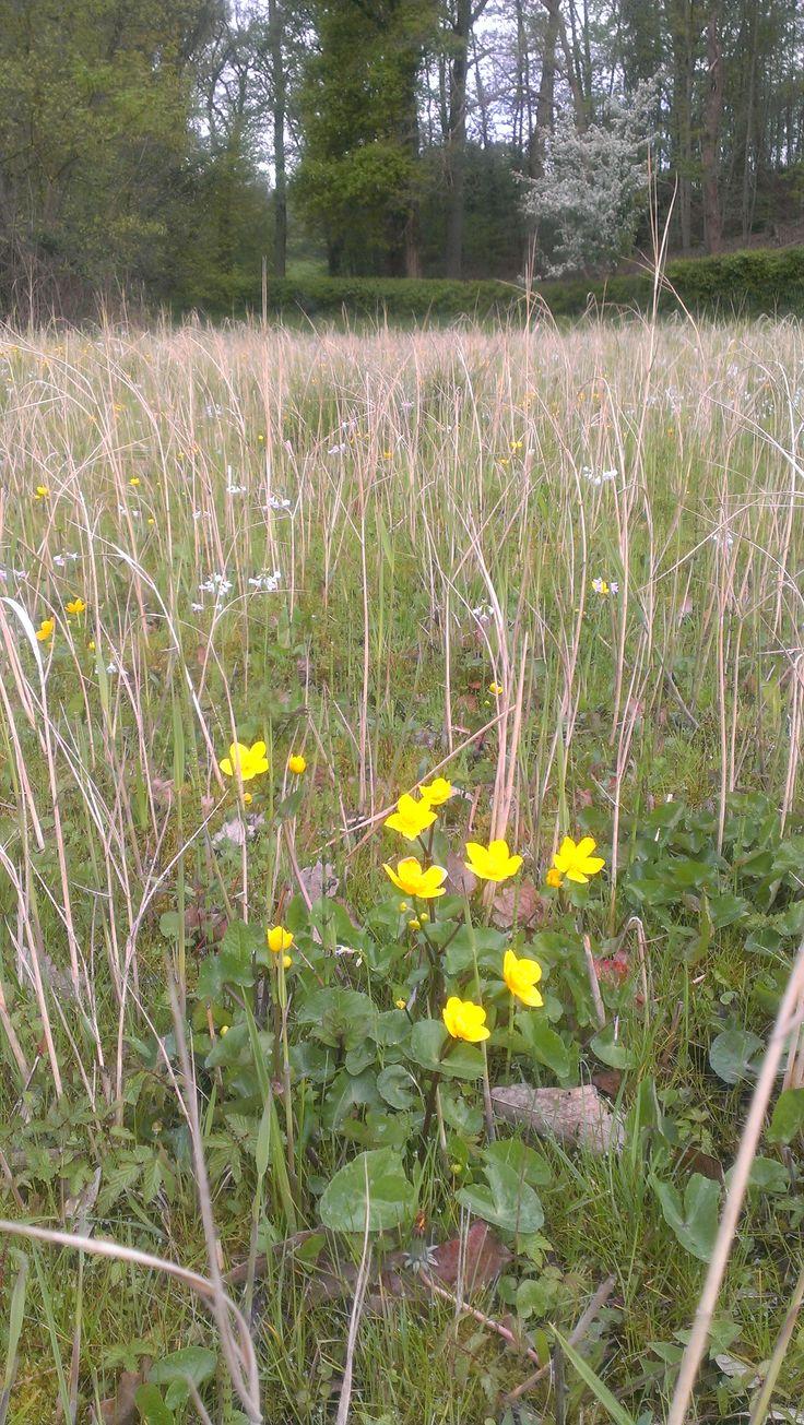 Meer dan 1000 ideeën over inheemse planten op pinterest ...