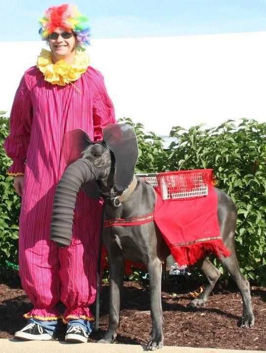 Dane as elephant