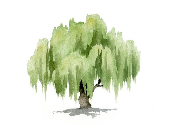 Willow Tree Art Print  Wall Decor  Watercolor Painting